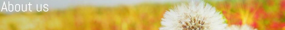 web banner 3t